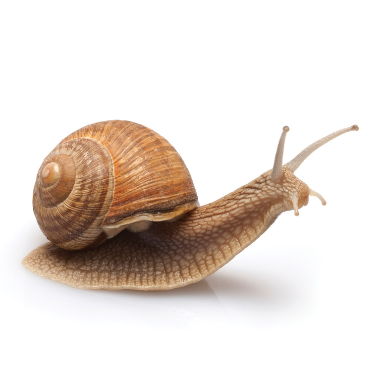 Picture of a snail