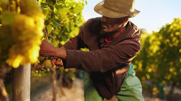 California Governor Approves Farmworker Overtime Bill