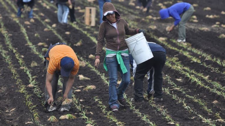 H-2A Farmworker Recruitment Moved Online