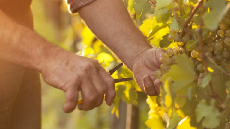 Pre-Presidential Jobs: Picking Grapes and Teaching Greek