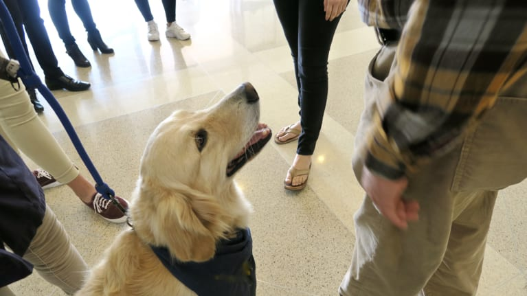 Need a Morale Booster? Therapy Dogs Can Help