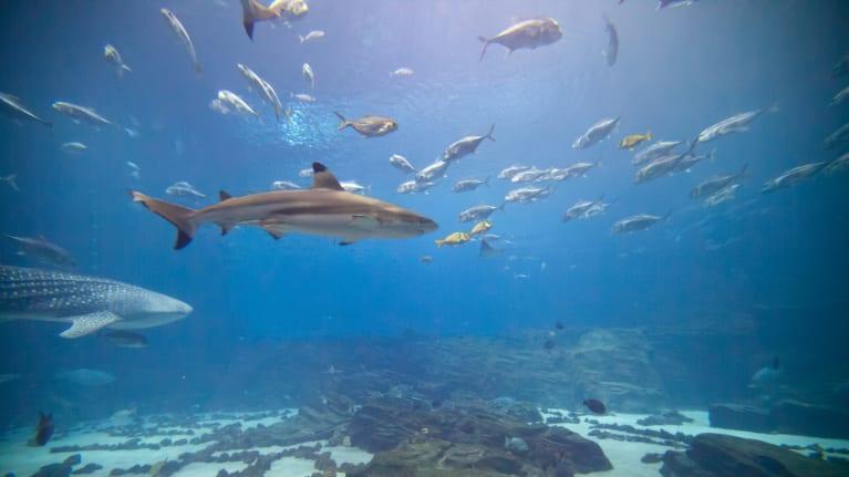 shark and fish in aquarium