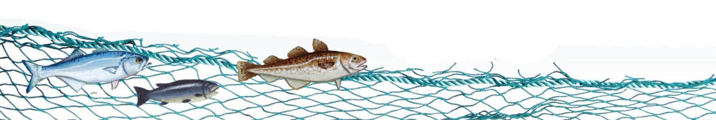 fish on net