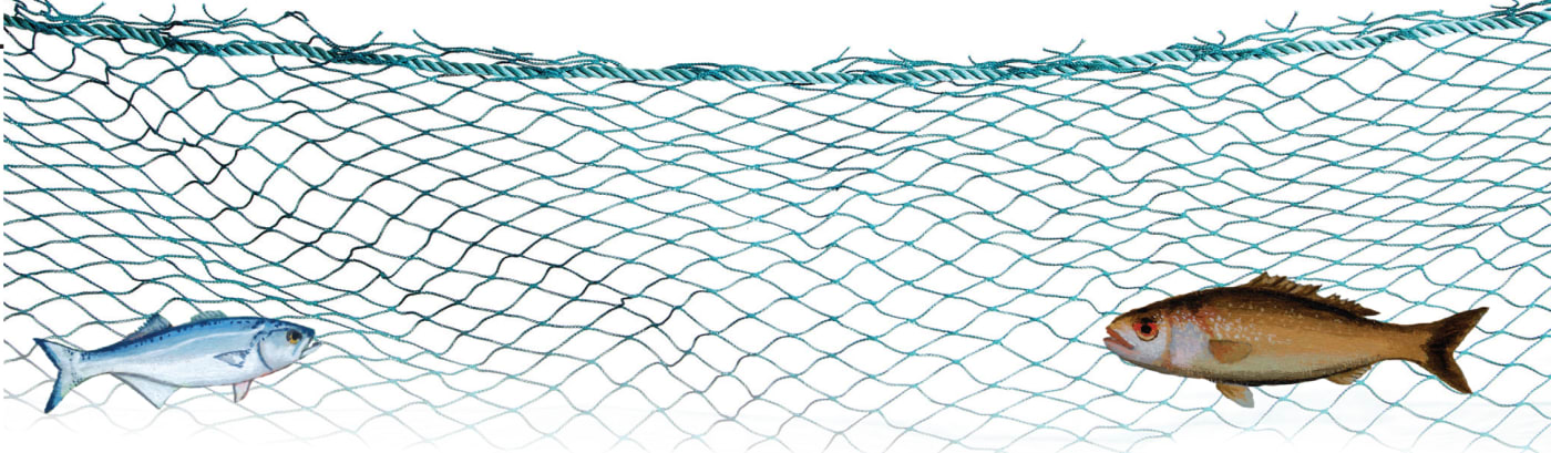 net and fish