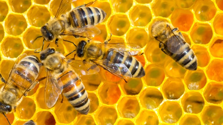 bees working in beehive